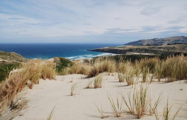 Dunedin – Halbinsel