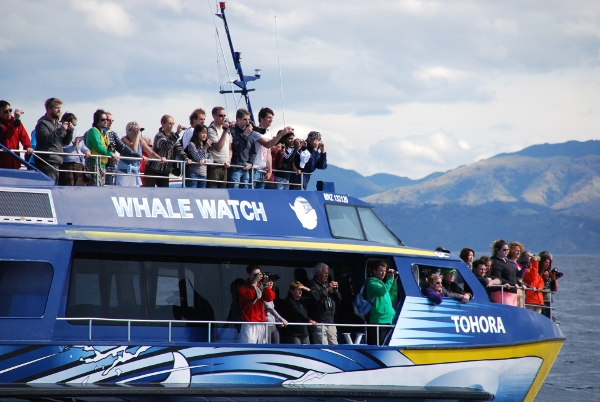 Kaikoura – Whale watching