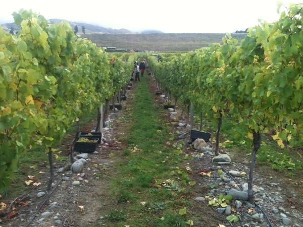 Weinfelder und Hostel-Leben